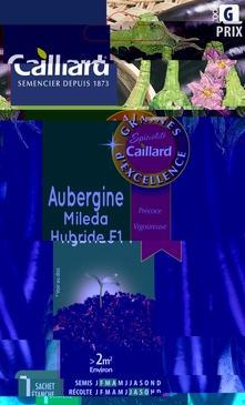 GRAINES D'AUBERGINE MILEDA HYBRIDE F1 - 0,4 GR