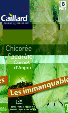 GRAINES DE CHICOREE SCAROLE - 4 GR