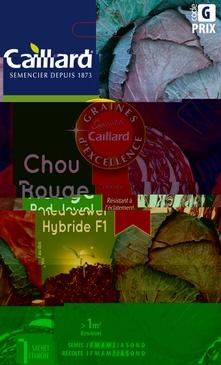 GRAINES DE CHOU ROUGE RED JEWEL HYBRIDE F1 - 140 GRAINES
