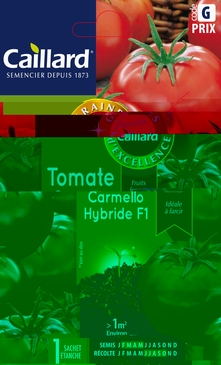GRAINES DE TOMATE