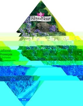 GRAINES AROMATES - LAVANDE PROVENCALE PARFUMEE - 0,8G